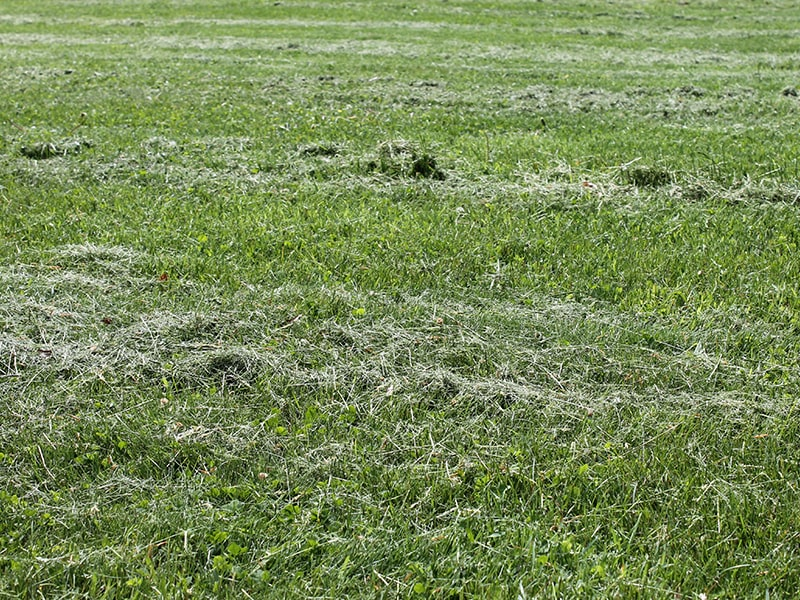 lawn-clippings-img-1-min