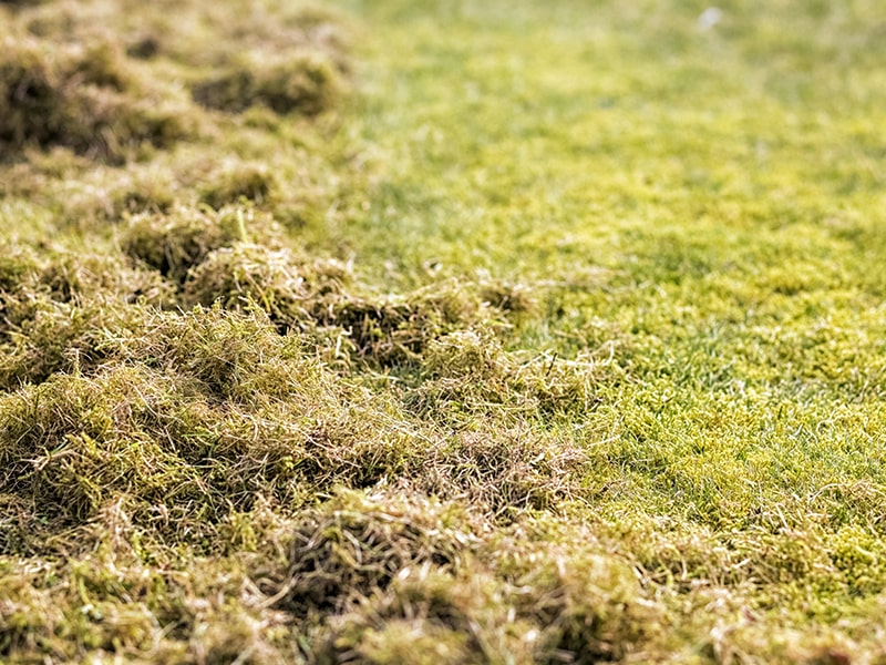 resources-spring-lawn-care