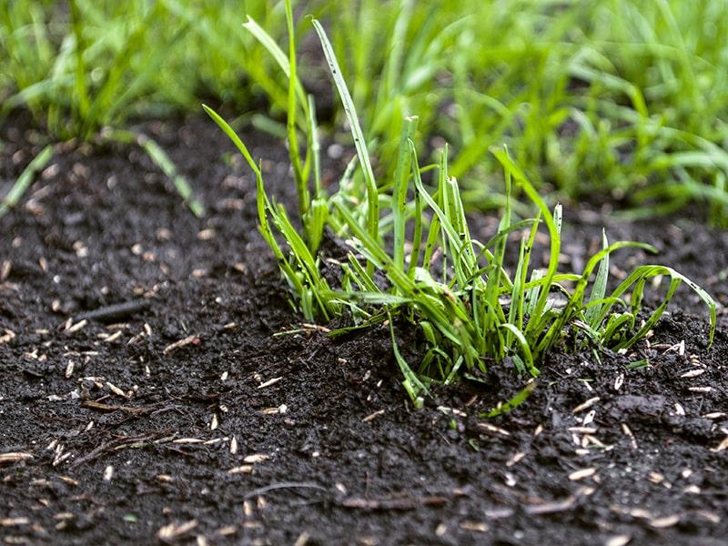 resources-spring-seeding-prep